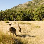 GRAMPIANS ATTRACTIONS